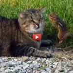 VIDEO INCREDIBILE: gatto attaccato dalla sua cena!
